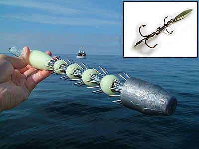 Squid squid fishing in half moon bay humboldt squid for Deep sea fishing half moon bay