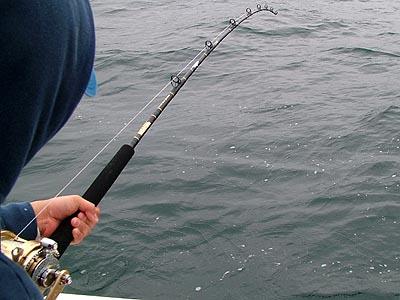 Berkley Trilene Big Game 50# review - Albacore Tuna Fishing