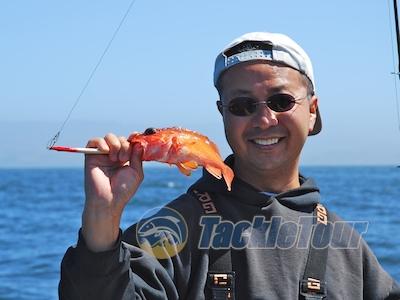 Tigerfish sportfishing vessel san francisco bay rock cod for Rock cod fish