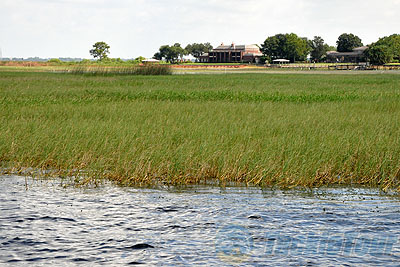 Florida bass fishing orlando bass fishing guides lake for Lake toho fishing guides